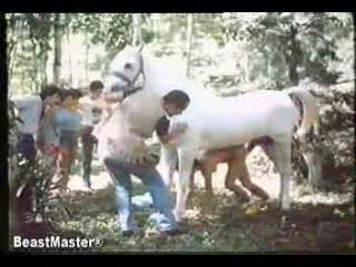 Animal Horse - Monkey - Beastmaster Animal Zoo03